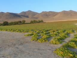 Land der Sonne - mit saftig grünen Büschen und strahlend blauem Himmel.